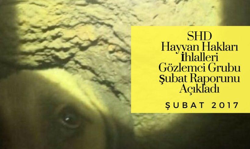 SHD Hayvan Hakları İhlalleri Şubat Ayı Raporu Yayınlandı