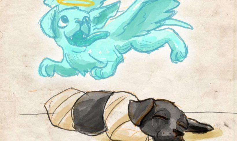 SHD Hayvan Hakları Çalışma Grubu: Yavru Köpek için Adalet İstiyoruz!